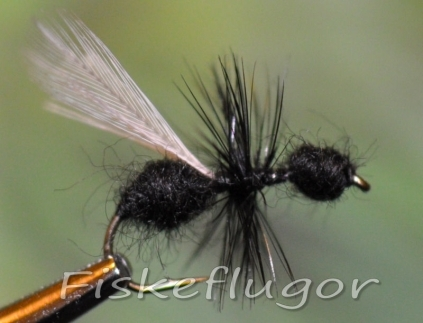 Black Flying Ant Flygmyra Svart Flygmyra