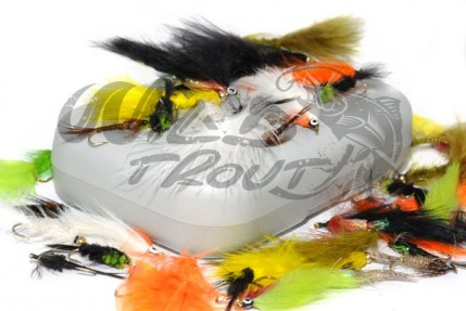 40_rainbow_trout_wt.jpg