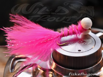 12-Pack Booby Nymph Pink