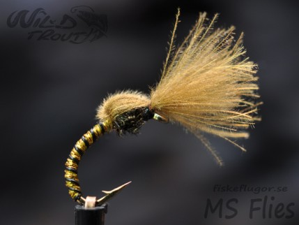CDC_Golden_Olive_emerger_1_wt_600.jpg