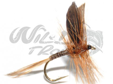 12-Pack Ginger Quill Dry