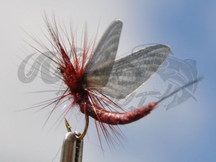 MS_Mayfly_brown_blue_back_wt_2.jpg
