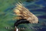 12-Pack Streaking Caddis Black
