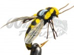 Wasp Geting