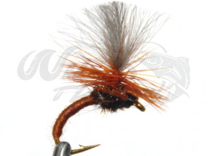 CDC Klinkhammer Brown