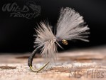 MS Wild Boar CDC Emerger